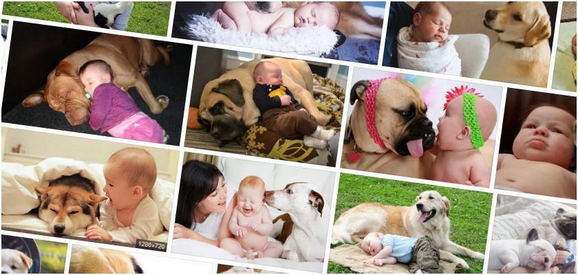 Yavru Köpeklerin Beslenmesinde Dikkat Edilecekler