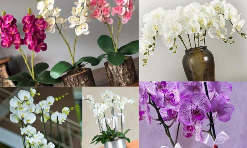 Orkide Bakımı Nasıl Olmalı
