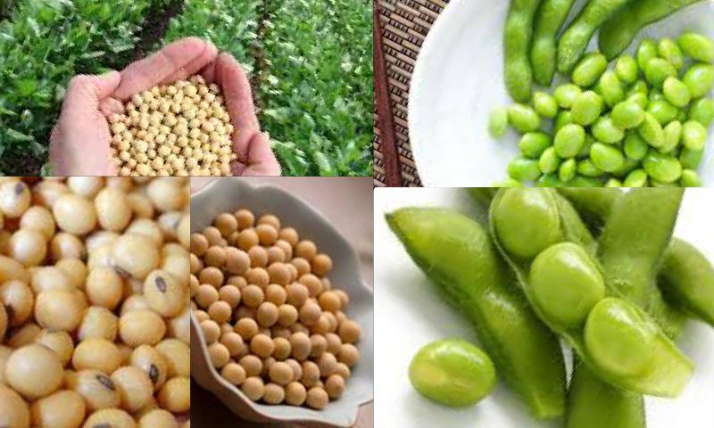 Yerli Tohumun Diğer Tohumlardan Farkı Nedir?